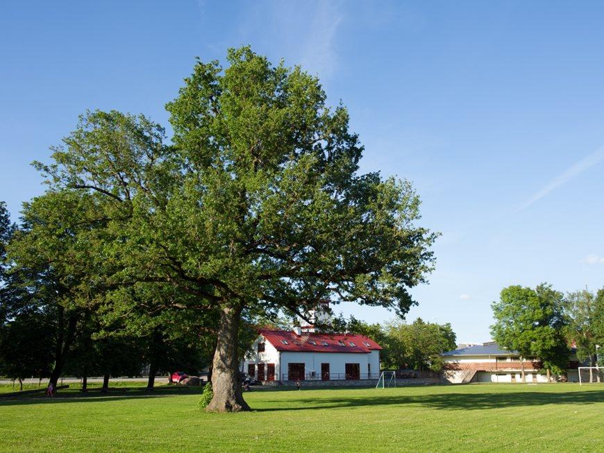 Orissaare-Oak